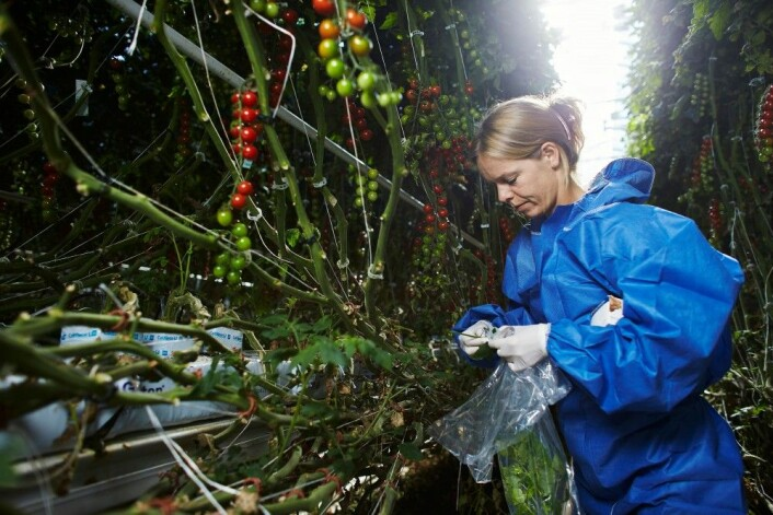 Mattilsynets overvåking i 2016 viser at nivået av plantevernmidler i mat generelt er lavt. (Foto: Mattilsynet)