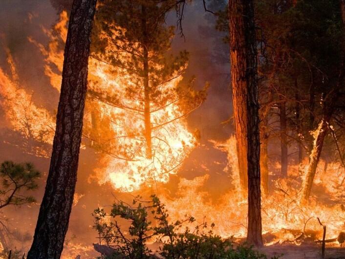 Skogbrann forurenser mer enn kontrollert brenning foretatt av profesjonelle. (Foto: Kari Greer/USFS Gila National Forest via NASA)