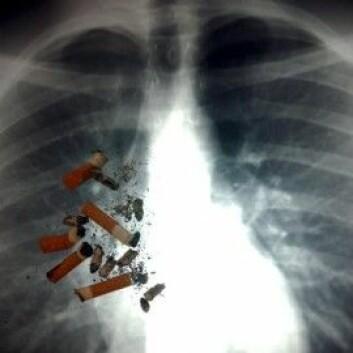 """Lungekreft er bare en av mange dødelige sykdommer som kan følge av sigarettrøyking. Antakelig dør mellom halvparten og to tredeler av alle røykere av sigarettene.(Illustrasjonsfoto: <a href=""""http://www.colourbox.no"""">www.colourbox.no</a>)"""