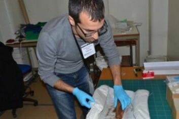 Claodio Ottoni ser på en mumifisert katt for å hente ut DNA. (Foto: UiO)