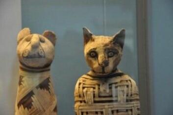 Det finnes mange mumifiserte katter og enkelte er godt bevart, slik som disse som er stilt ut i British Museum. (Foto: Claudio Ottoni)