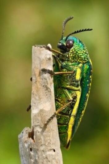 Det ville være flere og større insekter i verden. (Foto: Ondrej Prosicky / Shutterstock / NTB scanpix)