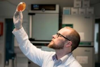 Roger Junges forsker på hvordan streptokokker snakker med hverandre. (Foto: Margit Selsjord/UiO)
