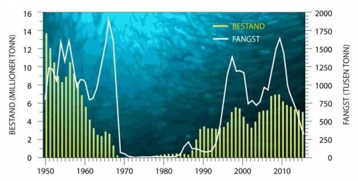 Oversikt over utviklinga i bestanden av norsk vårgytende sild fra 1950 og fram til i dag (venstre akse og gule søyler). Den hvite linja viser fangstene som har blitt tatt opp av alle land som deltar i fisket (Norge, EU, Færøyene, Island og Russland). Den norske andelen av totalkvoten er på vel 60 prosent. (Grafikk: Reibo/Havforskningsinstituttet)