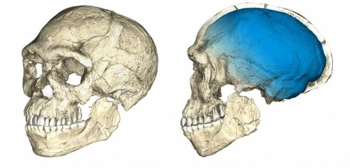 Dette er den rekonstruerte hodeskallen til mennesket som ble funnet i Jebel Irhoud i Marokko. (Foto: Philipp Gunz, MPI EVA Leipzig)