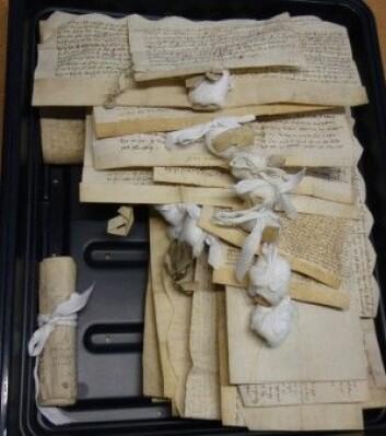 En bunt mellomaldertekster. Språkforskarane har reist rundt til universitetsbibliotek og og arkiv, til og med gamle slott, i Storbritannia og lese, tolka og skrive av dei handskrivne dokumenta. (Foto: Kjetil V. Thengs)
