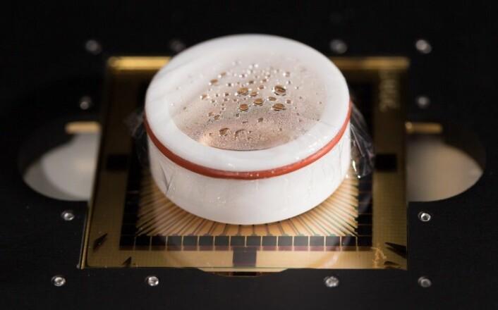 Oppi den hvite koppen er en kultur av nerveceller fra rotte, koblet til et gitter av små elektroder. (Foto: NTNU)