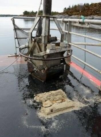 Dette er en prøve av skjellsand, hentet opp fra sjøbunnen utenfor Smøla. (Foto: NGU)