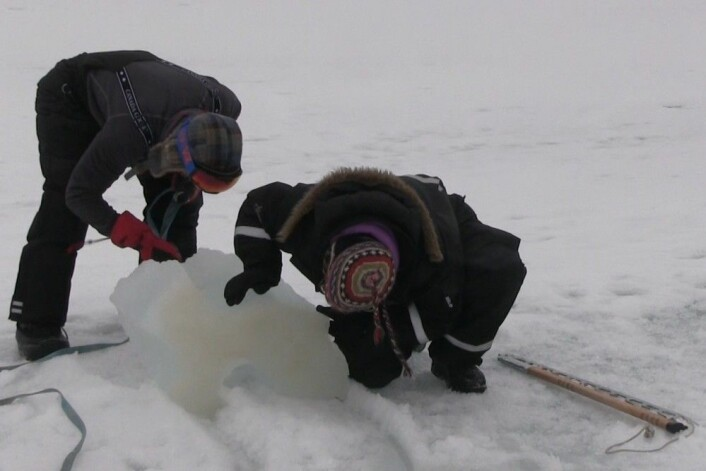 Eva Leu studerer algene som lever under isen i Van Mijenfjorden. Da forskning.no var med, var det så mange av dem at isen ver helt brun på undersiden. (Foto: Eivind Torgersen)