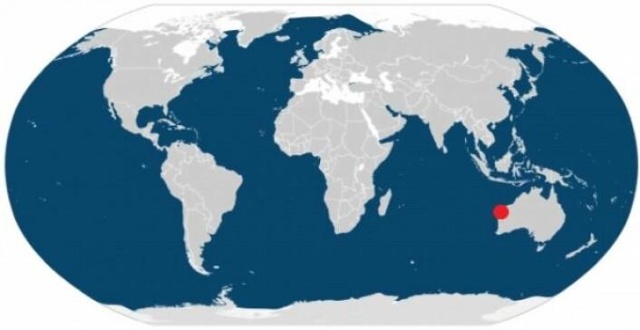 Kartet viser at knølhvaler er utbredt over nesten hele kloden – de finnes i områder som er farget blå. Exmouth-bukta, hvor danske forskere nettopp har utført forskning på knølhvaler, er markert med en rød prikk. (Illustrasjon: IUCN/videnskab.dk)